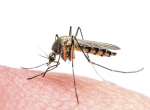 Zika: How to Protect your Family